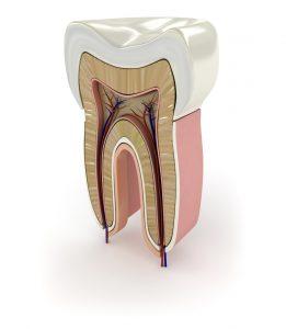 Endodoncija – tretman savremenim mašinskim instrumentima
